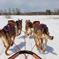 Disabled skier from Vassalboro pioneers 'monoskijoring' with local sled dogs