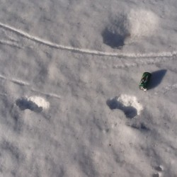 Winter tracks make identifying wildlife easier