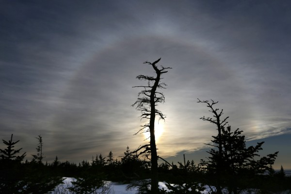 Sunlight passing through ice crystals creates a halo in the sky, framing a dead spruce tree near the summit of Cadillac Mountain at Acadia National Park.