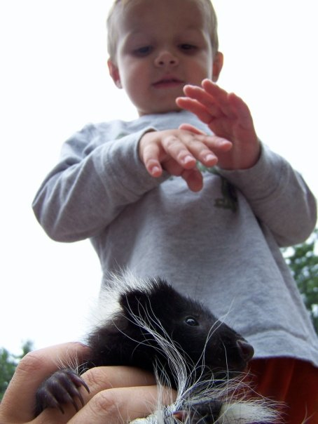 Nick Farrington, son of licensed wildlife rehabber Adam Farrington, looks down at an orphaned skunk his family is rehabilitating in 2008 at their home in Poland, Maine. The skunk was later released into the wild.