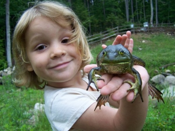 Isabella Farrington, daughter of licensed wildlife rehabber Adam Farrington of Poland, releases a bullfrog that the family rehabilitated after being caught by a dog in 2008.