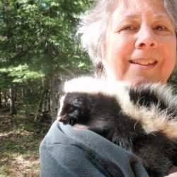 Help wanted: Bangor-area wildlife rehabilitator