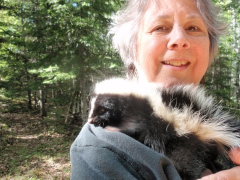 Wildlife rehabber Nancy Fox holds a skunk on Oct. 6, 2011, at her home in Surry. The skunk was brought to her as an orphaned baby a month prior.
