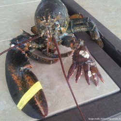 Lobstermen from US, Canada meet in Maine