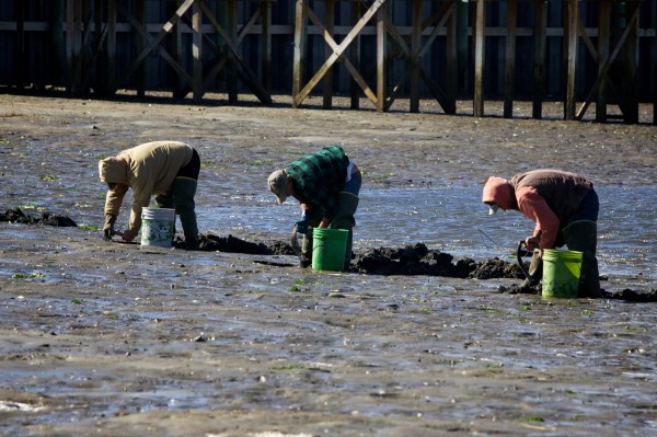 A trio of diggers search for sand worms near the mouth of the Scarborough River in Scarborough in this October 2012 file photo.