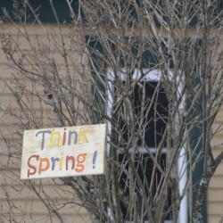 "One Prospect home owner has hung a sign in a small bush near the road encouraging motorist to ""Think Spring !"""