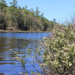 Butler Head Conservation Easement Implemented