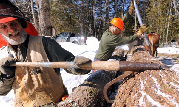 Jim Ostergard (left) of Peregrinator Services Horse Logging and Raymond Hill of Second Draught Farm roll a pine saw log from the scoot, a large wooden sled, using peavies while working in a Lincolnville woodlot.