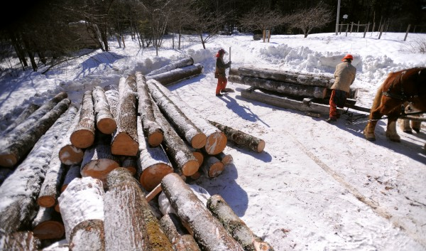 Jim Ostergard (left) and Raymond Hill unload pine saw logs from the scoot near the road in Lincolnville.