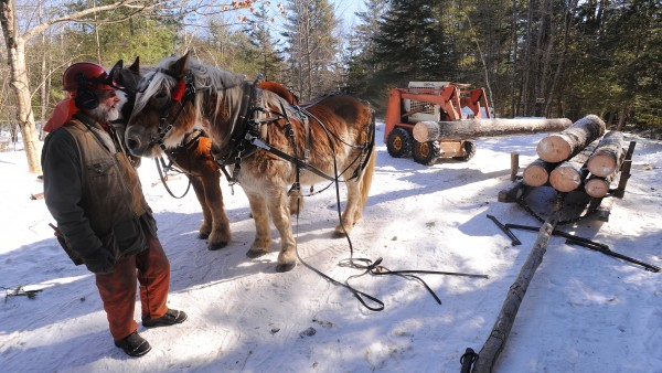 Jim Ostergard (left) holds onto the horses while Raymond Hill loads logs onto the scoot at the landing. The logs are pulled from the woods one at a time on rough trails and at a landing they are loaded onto the scoot, which enables the horses to pull heavier loads on hard-packed snow to the roadside. Hill and Ostergard, a certified master logger from Appleton, both use horses and have been working together in the Lincolnville woodlot for a customer.