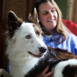 Disabled border collie 'wakes up happy every day'