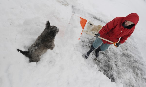 Betty Clement shovels her driveway on 14th Street in Bangor as her dog Blitzen (left) barks and bites at the snow she clears. Dasher, her other pet, watches after Thursdays' storm ended.