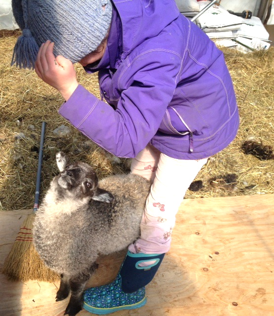 Ruth Burchstead, 8, plays with May, a bottle fed lamb in Wiscasset on March 10.