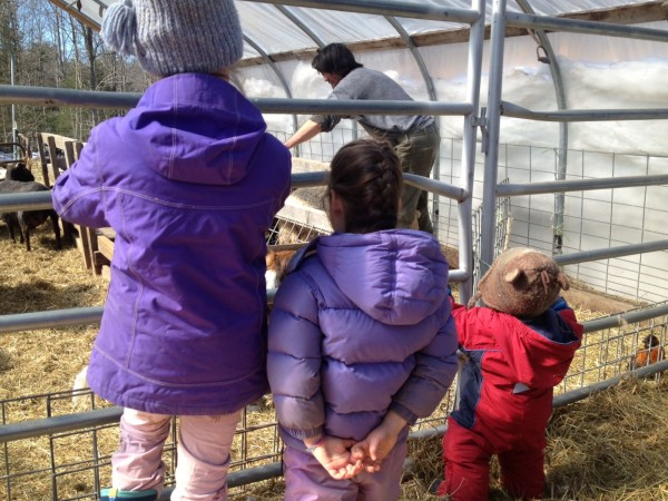 From left, Ruth, 8, Leah, 4 and Asa Burchstead, 15 months, watch their father prepare sheep to be shorn on their farm in Wiscasset on March 10.