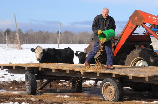 John &quotJack&quot Perry, owner of Fairview Farms in Hampden, gets spent grains from Geaghan Brothers Brewing Co. and uses it as feed for his cattle.