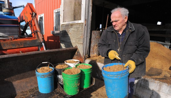 John &quotJack&quot Perry, owner of Fairview Farms in Hampden, prepares to give his cattle spent grains on Friday.