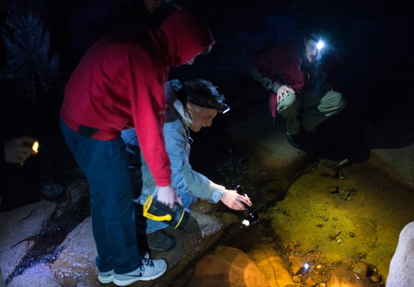 College of the Atlantic students search for amphibians at night with biologist Stephen Ressel, PhD. Photo by Sune Anderson.