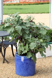 Potted vegetables give garden portable color