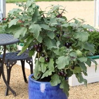 Expand your vegetable garden with containers