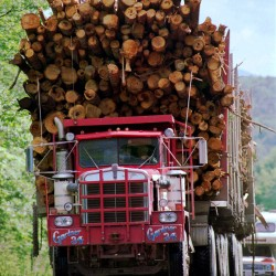 Senate rejects LePage plan to fund home heating reduction with increased state timber harvest