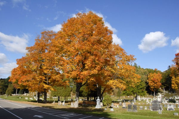 Trees growing near the State Street entrance to Mount Hope Cemetery splash their autumn hues across the cemetery's historic landscape in mid-October.