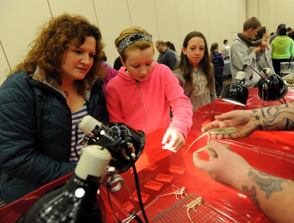 Susanne Hopkins (left) and her daughter Lillian, 12, of Pittsfield, look at bearded dragons held by Cory Gonsalves, owner of Simply Smooth Dragons in New Hampshire at the Northeast Reptile Expo on Sunday at the Cross Insurance Center. Going to the expo was part of Lillian's 12th birthday present.