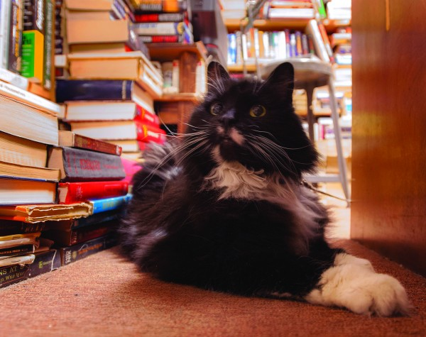 &quotKeeper&quot the cat relaxes at Pro Libris, a used bookstore located at 10 Third St., Bangor.