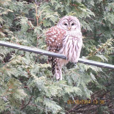 You might even hear a barred owl on your way in!