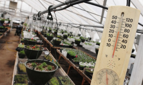 Temperatures hover in the 20s outside while warm moist air fills Rideout Gardens greenhouses on Tuesday in Eddington.