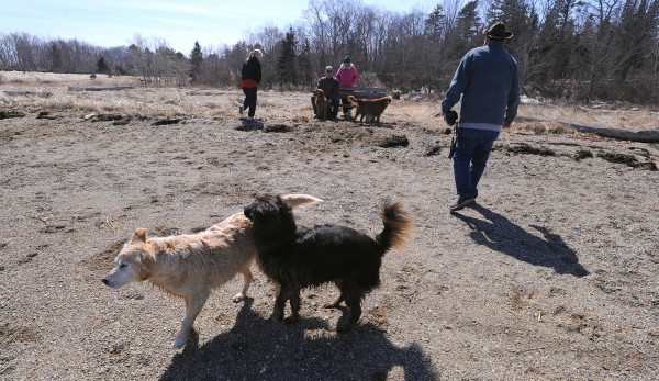People and their dogs enjoy the mild weather at Sandy Point in Stockton Springs on Friday afternoon. The spot is popular among dog owners, some of whom drive a considerable distance to spend time at the beach.