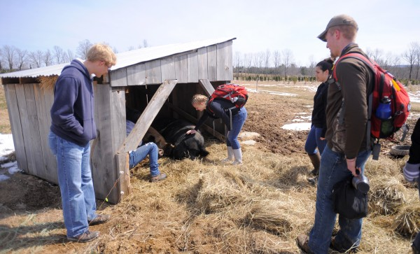 A group of Brewer High School students check out a pig pen and the baby piglets at the Parker Family Farm in Newport on Thursday. Thirty students came to visit as part of their environmental issues class to see a small farm that uses sustainable agricultural methods.