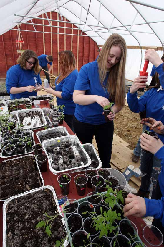 McKaylee Michaud works on planting seedlings recently in the Houlton High School greenhouse.
