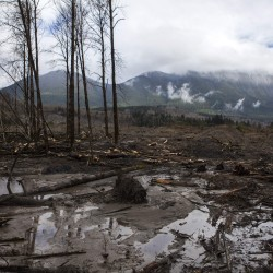 Emergency crews face toxic challenge at Washington state mudslide; death toll up to 24