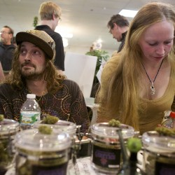 Homegrown Maine medical marijuana trade show