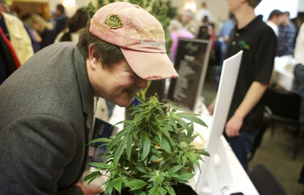 Jeff Clapp smells a cannabis plant Saturday from Brigid Farms that was on display at the Home Grown Maine Medical Marijuana Trade Show at the Spectacular Event Center in Bangor.