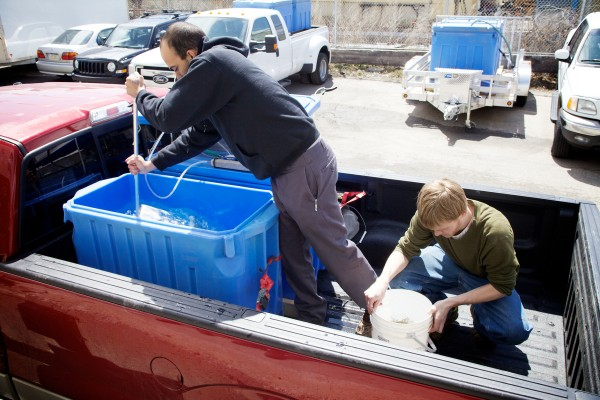 Andrew Kapuscinski (left) and James McIntire of the Delaware Valley Fish Company transfer elvers from the back of a truck to the processing facility on Portland's waterfront on Monday. The elvers, or glass eels, were caught by fishermen in Waldoboro.