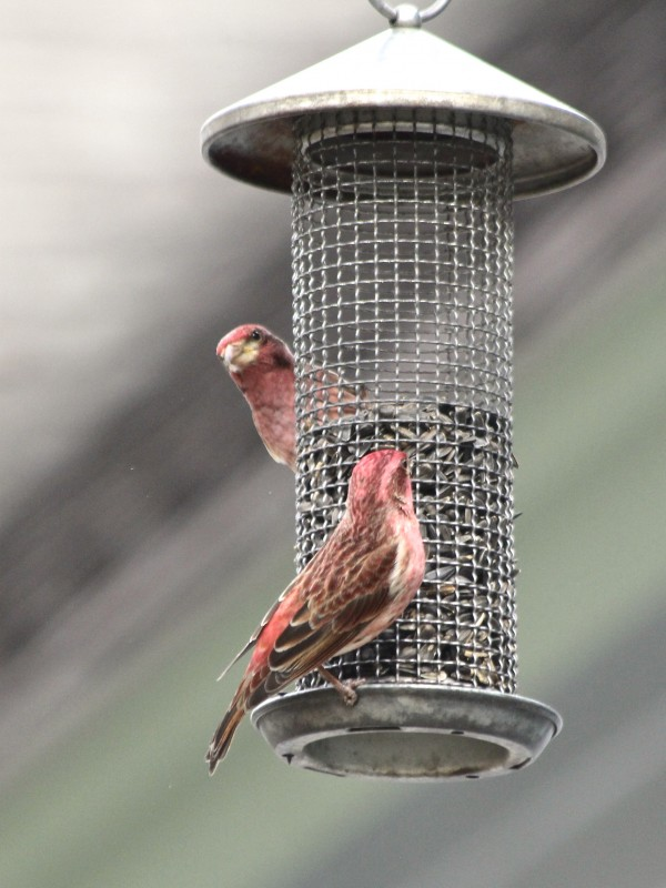 Maine Experts Offer Advice On How To Attract Returning Birds To Your  Backyard
