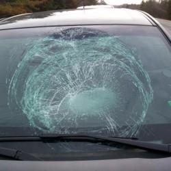 Calais woman hits turkey, shattering windshield, on I-95 in Sidney