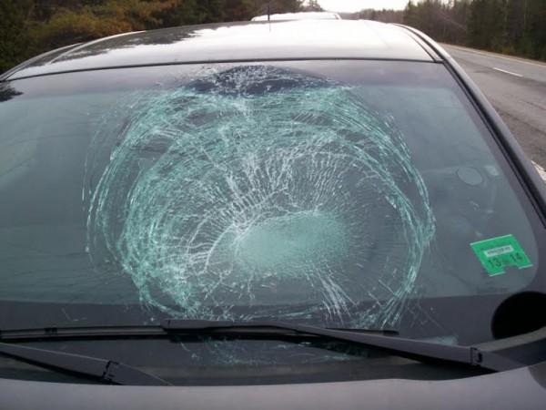 The windshield of a police cruiser after a wild turkey flew into it on Thursday on I-95.