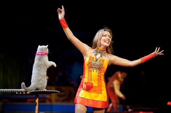 Among the acts appearing during the 51st annual Anah Shrine Circus is Mayya Panfilova and her Performing Housecats.