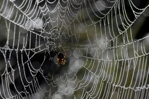 Spider at Salt Pond by Michael Sacca