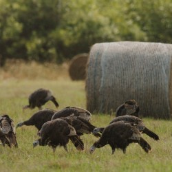 First week may be best for turkey hunters