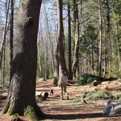 1-minute hike: Brown Woods in Bangor