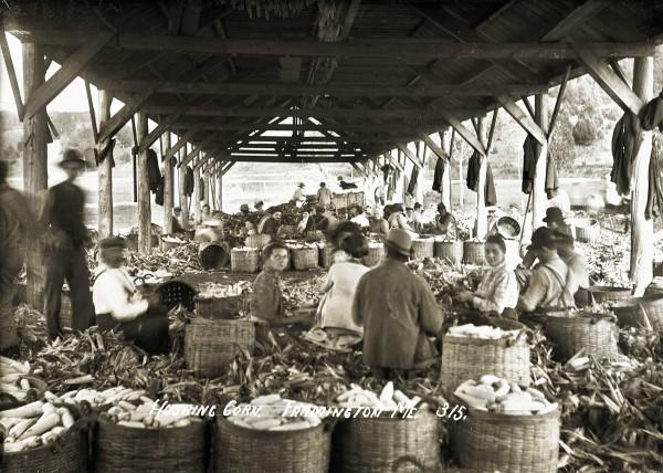 Husking Corn, Farmington Maine