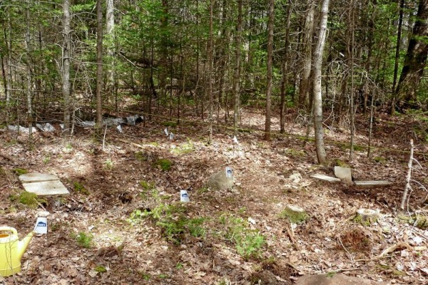 This is the primary site in Trenton, pictured in May 2013, where broken gravestones were found. Note the gravestone on the left and the fragments on the right. White flags identify probable buried gravestones or fragments.