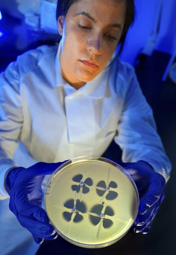 CDC microbiologist Johannetsy Avillan holds up a plate that demonstrates the modified Hodge test, which is used to identify resistance in bacteria known as Enterobacteriaceae in this undated handout photo provided by the U.S. Center for Disease Control.