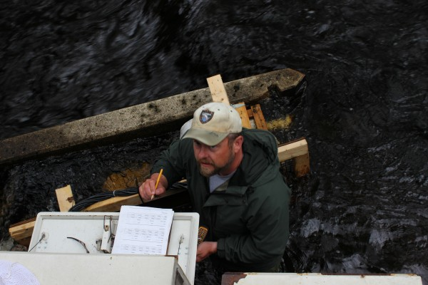 Richard Dill, a fisheries biologist for the Maine Department of Marine Resources, checks a fish-counting facility on Blackman Stream in Bradley on May 20, 2014. More than 30,000 alewives have returned to the stream, and 1,500 an hour were passing through the counter on that afternoon.