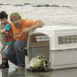 'Bittersweet moment' as animal rehab center releases final five seals before closing down