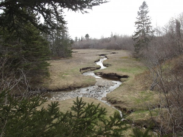 Downeast Salmon Federation established a smelt reserve around a portion of Redmond's Brook in Harrington.