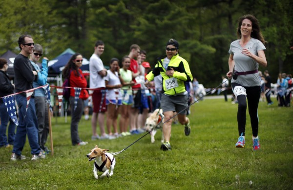 Cue, a Jack Russell terrier, happily pulls his master Gina Snow of Mt. Vernon on the final stretch to the finish line.